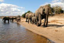 Travel   Botswana / by Kelly A