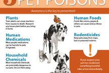 Pet Poison Awareness