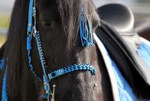 DIY für Pferde