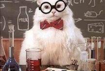 Wtf Nerd / Cat. nerd