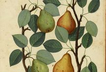 Dibujo botánico