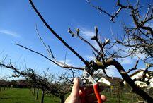 La taille des arbres fruitiers / Il faut connaître les bases,  faire de la pratique sur le terrain, observer, analyser et  comprendre les erreurs qu'on a pu faire. Avant de placer un sécateur sur une branche, il faut savoir d'avance, pourquoi je veux la couper et quelle en sera la conséquence. C'est ainsi qu'on arrivera à former un arbre fruitier.