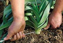 plante et légume