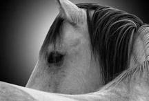 horses / by Esther Paz Alvarado