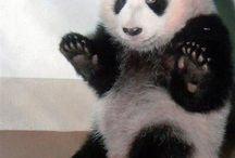 *pandas