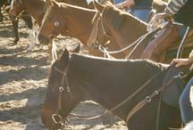 Horses/Farming Things