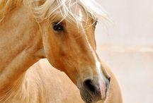 *cavalos*