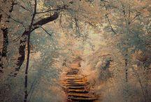 Reif im Wald