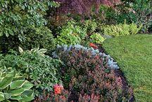 Gardening / by Erin Legere