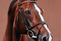 horse-hlava