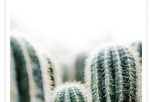 Cactusen