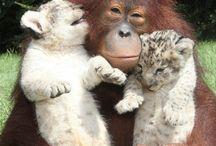 przyjaźń w świecie zwierząt