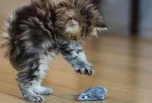 Katzenbilder und  Co