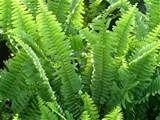 Wild Flower, Medicinal Herb, and Grass Garden