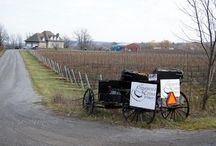 Twenty Valley Wineries / These are the Niagara Region of Ontario Wineries less than 10 km. from our home.