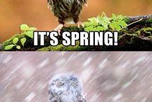 Owls! /