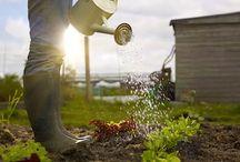 Urban gardening / Public agriculture.