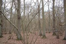 The Coppice Woodland - Case Study