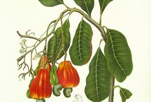 Botanica / Plantas, flores, frutos