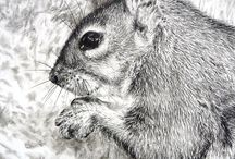 wildlife / Original charcoal drawings of animals and insects