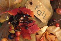 Falling into Autumn  / by Vera Constanza