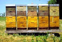 Don't Worry Bee Happy / by Gyna Gordon