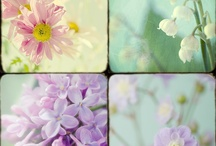 Flowers / by Marcy Gross Glick