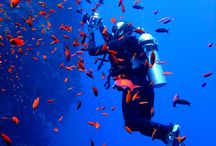 Diving / Scuba Diving!
