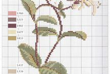 sorozat - növények