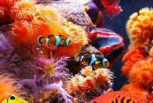 Atlantis animals