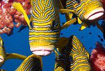 Underwater World / Beneath the sea