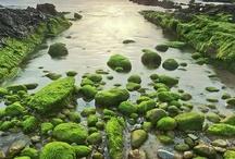 Nature Restorative