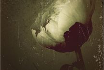 """Allée des fleurs / """"Il est d'étranges soirs où les fleurs ont une âme."""" Albert Samain"""