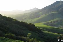 SLO Grown / by Pam Thompson