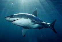 Paryby / Žraloci a Rejnoci