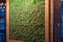 Стены мох