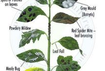 Bitki hastalık tedavileri