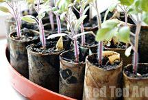 Frø&Planter