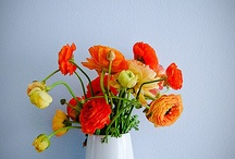 Flors