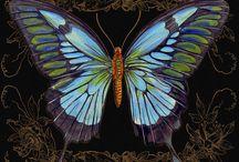 Tavus kelebek