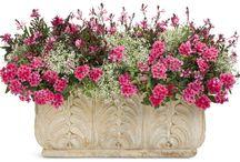 outdoor flower pot arrangements