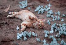 Animals / by Tara Phillips