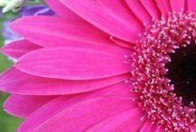 Scenery/Flowers :) / by Lauren Cooper