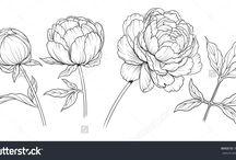 Blütenvoragen