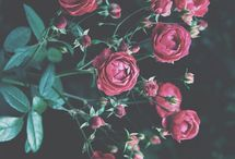 ❤ Flowers.