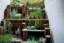 Terrace gardening / Innovative ways people prepare their Terrace gardens.