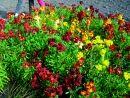 zahrada - kvetiny - perennials