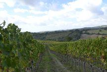 Wine Tour / I Nostri Wine Tour...Seguici e vieni a scoprire la Maremma!!!