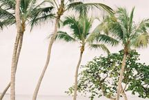 Summer Trees / Pictures of trees in summer particularly palm trees and other tree species in warm climates.