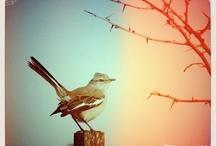 Vieil arbre et oiseau